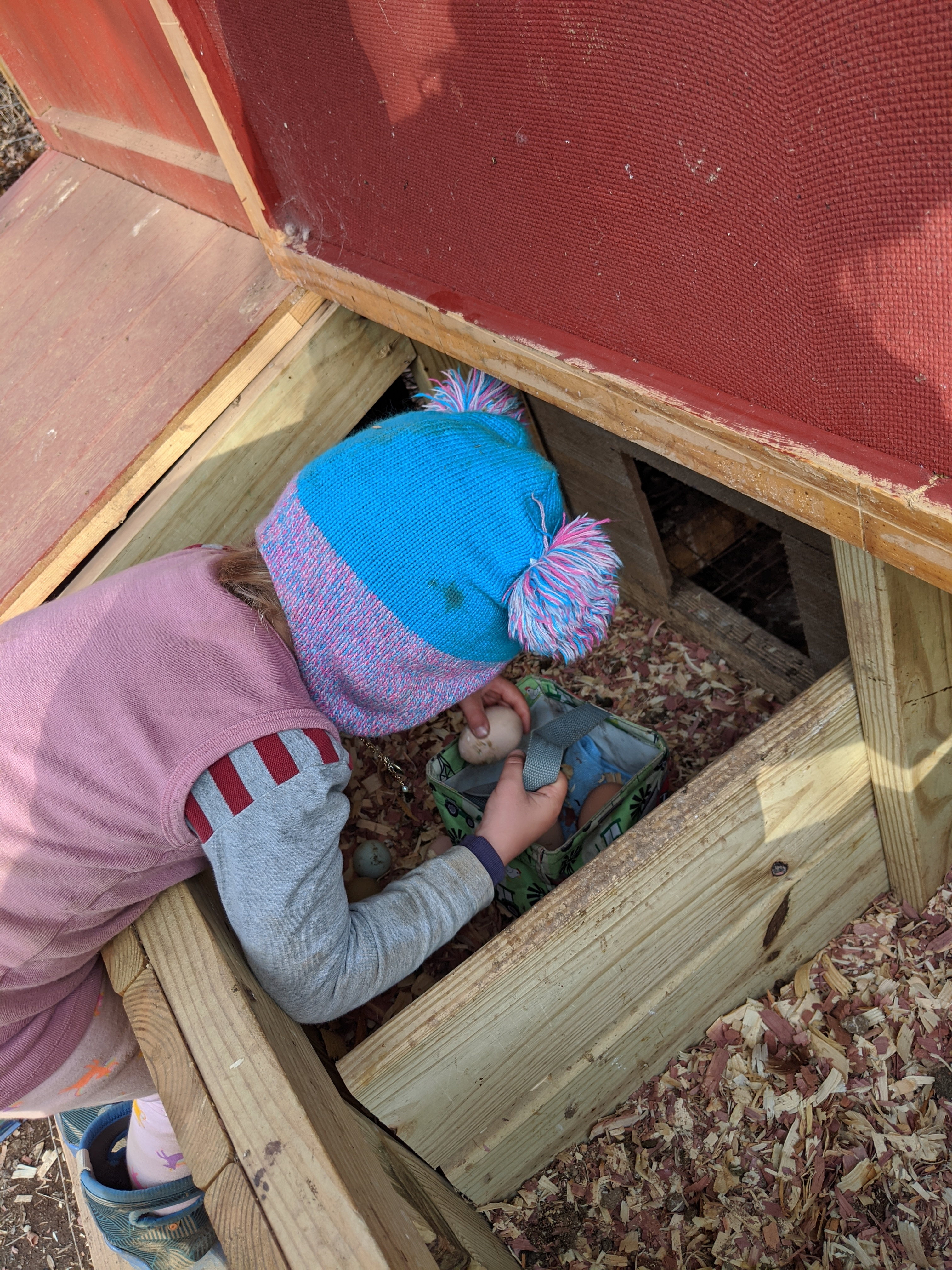 ashevillefarmstead-littlestlearners-chickenchores-eggs-eggcollection-helping