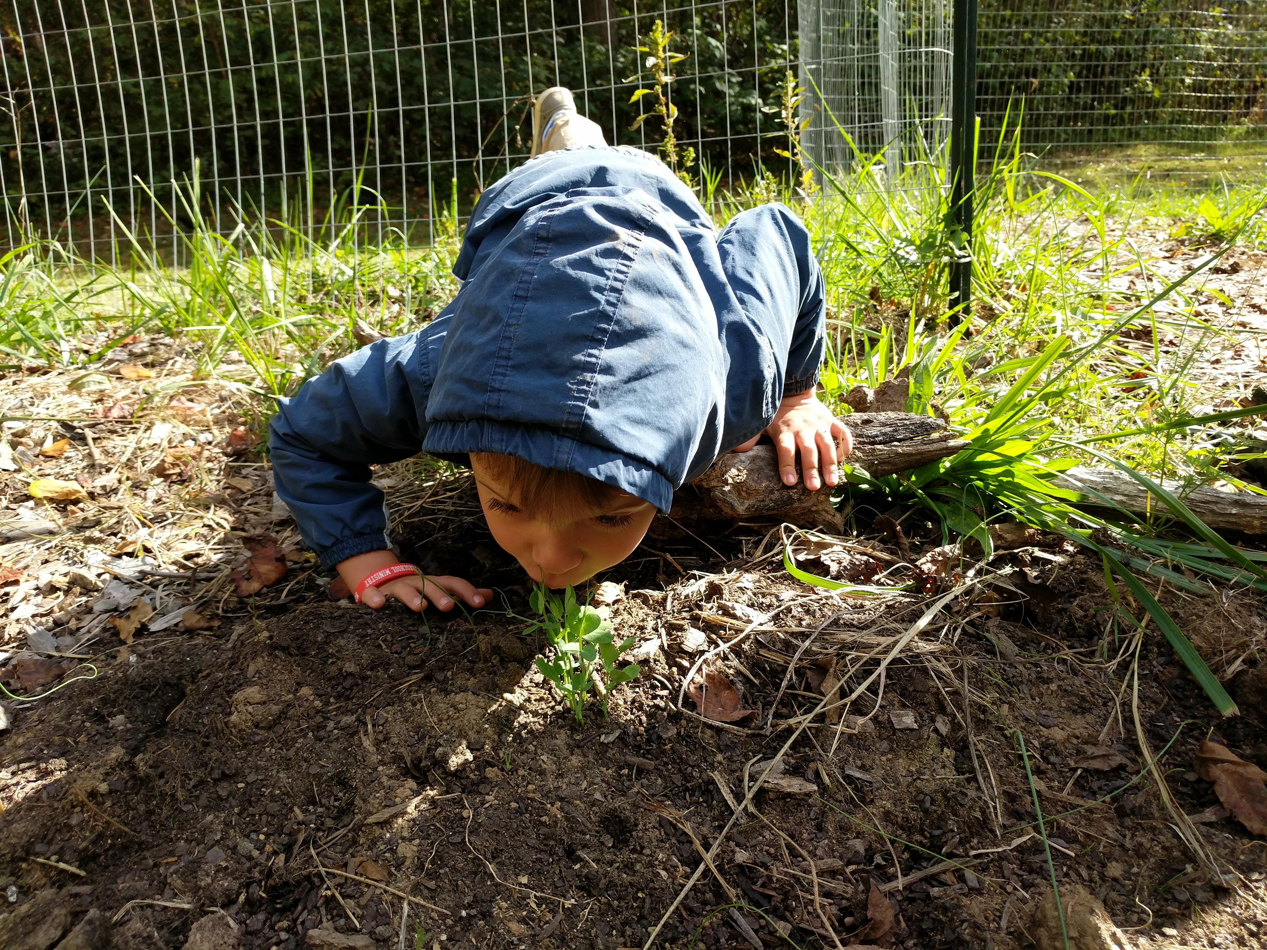 Asheville-farmstead-october-beans-kisses-kids-garden