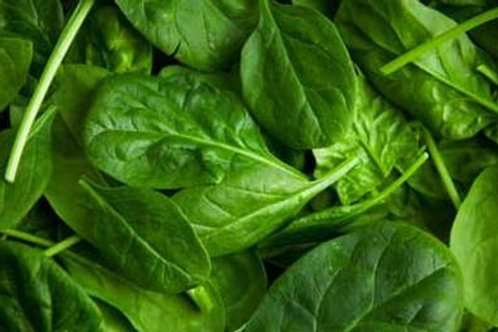 1lb Spinach (Wholesale)