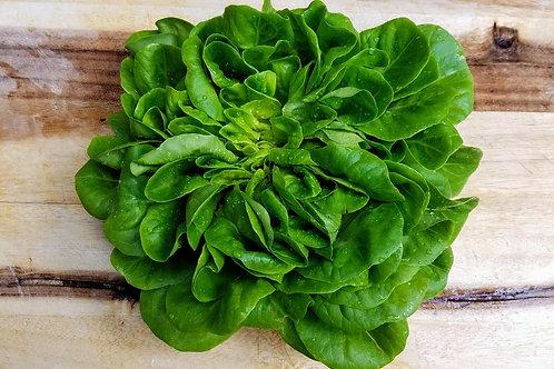 1 Head of Green Butter Lettuce