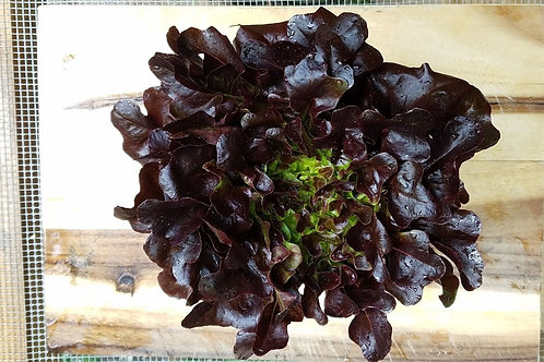 1 Head of Red Butter Lettuce