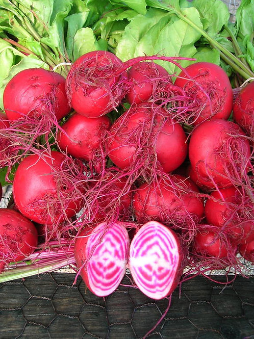 1 Case Chiogga Beets (with leaves) (Wholesale)