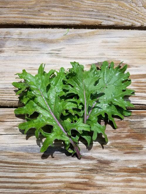1lb Baby Kale (Wholesale)