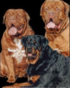 Hope3dogs-JulienLambertphoto.com-web.jpg