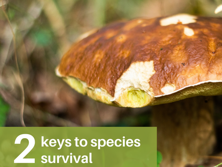 What are two keys to species survival?