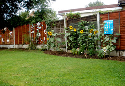 new_garden_07.jpg