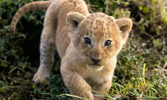 Be the lion kid