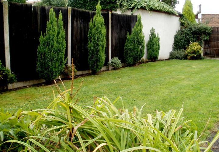 Our garden space