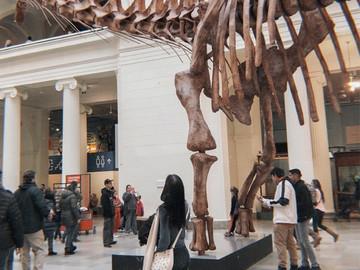 Un día en el FIELD MUSEUM