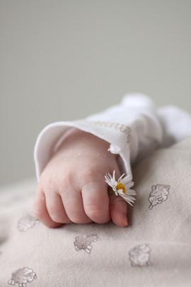 Babyhand mit Gänseblümchen.jpg