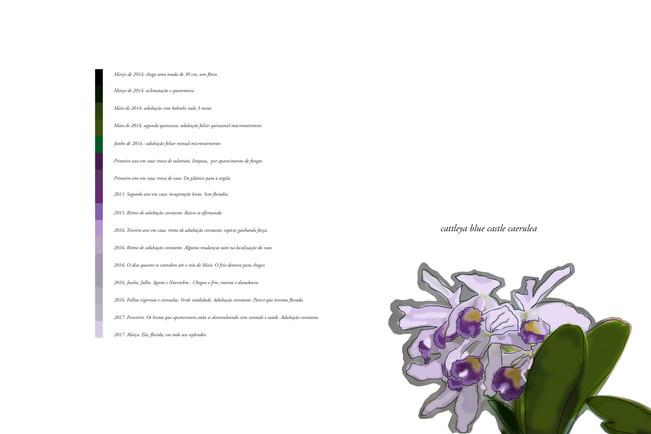 Cultivar orquídeas. A arte da espera e do olhar.