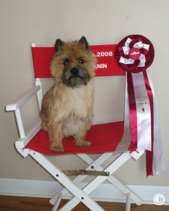 cairn-terrier-graffiti_clifford-royal1