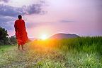 A Monk walks a path towards a setting su