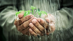 Old man`s hands holding young plant in t