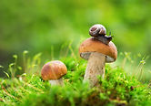Edible mushrooms in a forest on green ba