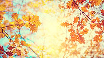 Autumn landscape. Autumn tree leaves sky