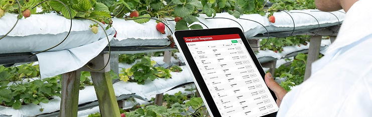 QuantumLeap app displayed on a tablet for an audit, in front of strawberries