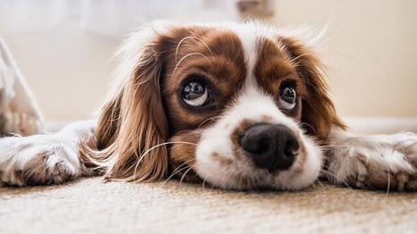 Dog is not eating food: Reasons & Solutions | Why Won't My Dog Eat? डॉग खाना क्यों नहीं खा रहा है