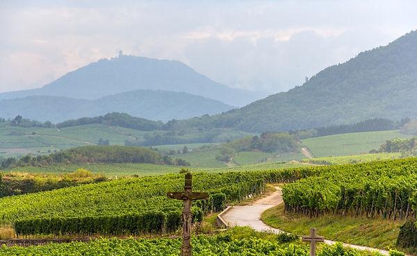 route-des-vins-alsace-Winemaster.jpg