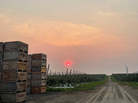 High Temperature and Smoke Impact Apple Crop, as of Aug. 20-2021