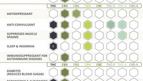 The Benefits of Cannabinoids & CBD