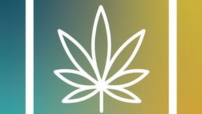 Healing Autoimmune Disease with Cannabis