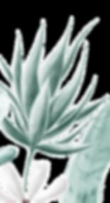 TL_COMPOSITION-03.png