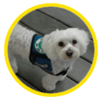 therapy-dog-150x150.png