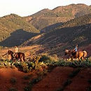Horse Riding Buggy Event Maroc.jpg