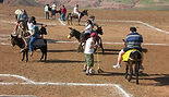 Team Building Polo Ane Buggy Event Maroc