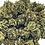 Thumbnail: TUTTI FRUTTI SMALL BUDS 50 GRAMMES