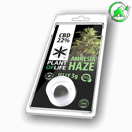 RESINE CBD AMNESIA HAZE 22% 3G PLANT OF LIFE