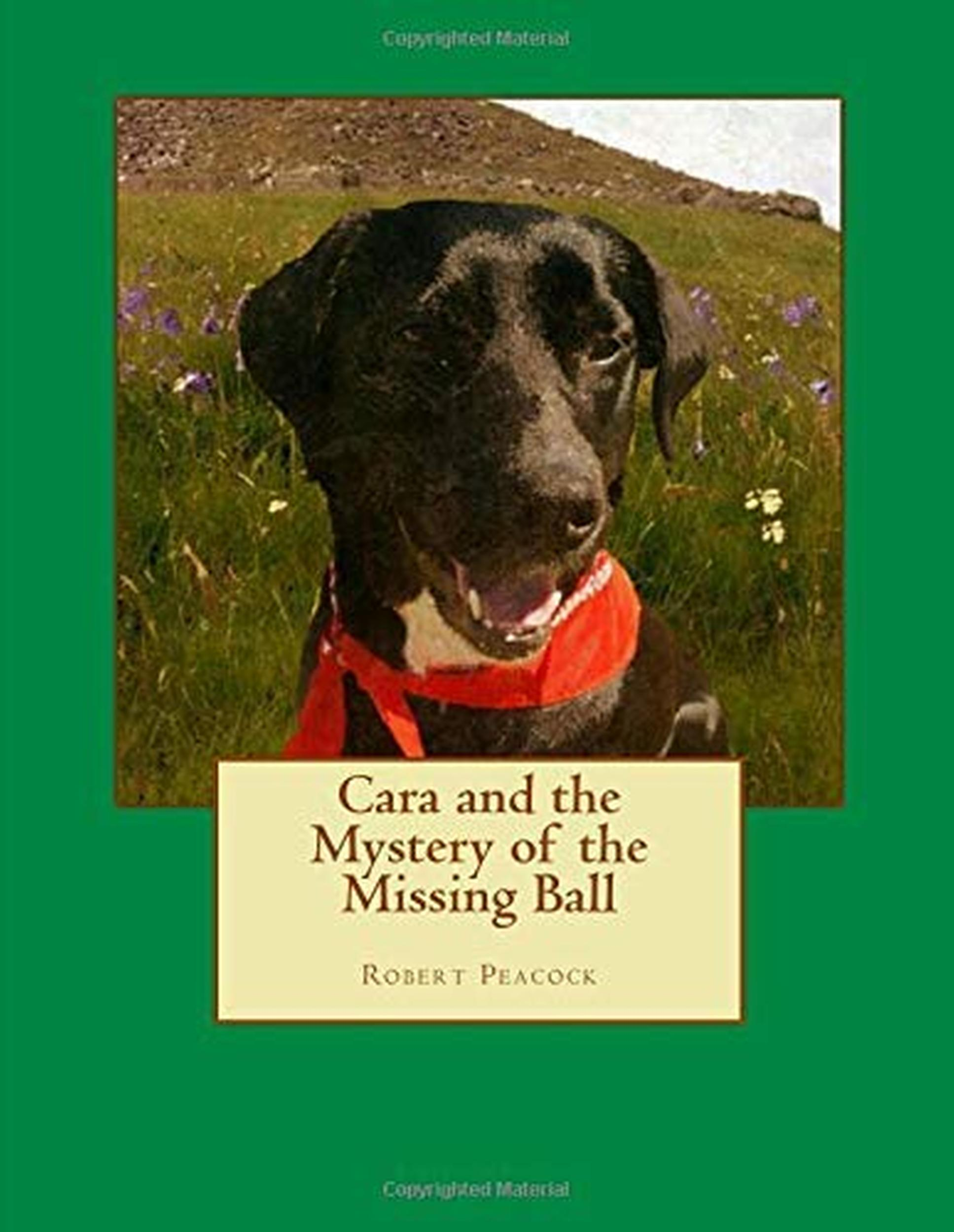 Cara and the Mystery of the Missing