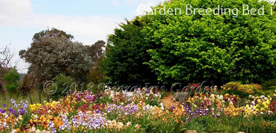 Garden Breeding Bed 1.JPG