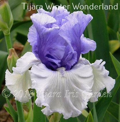 Tijara Winter Wonderland