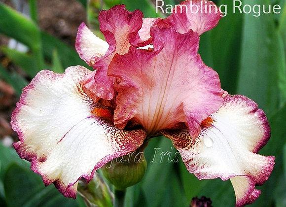 Tijara Rambling Rogue (Rambling Rose)