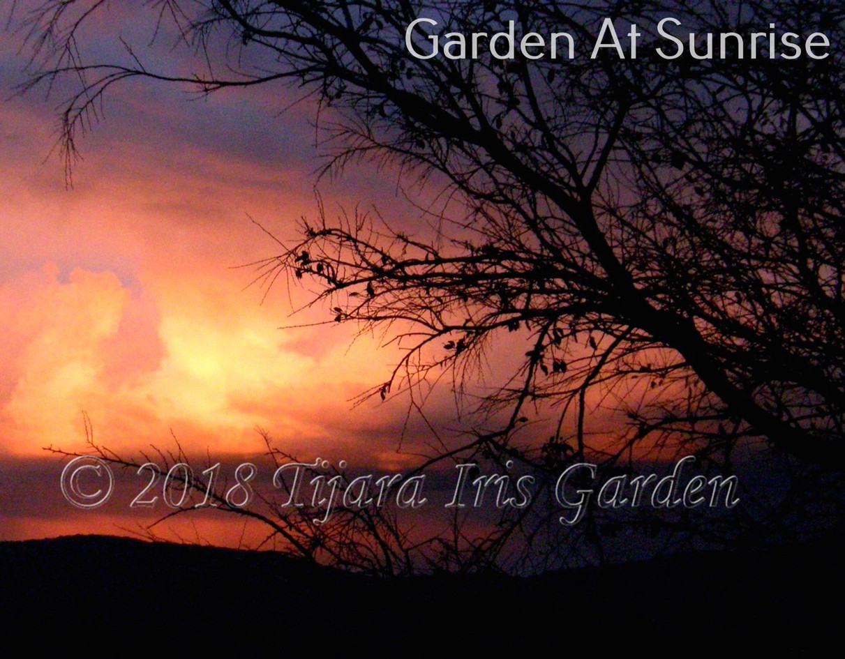 Garden At Sunrise.JPG