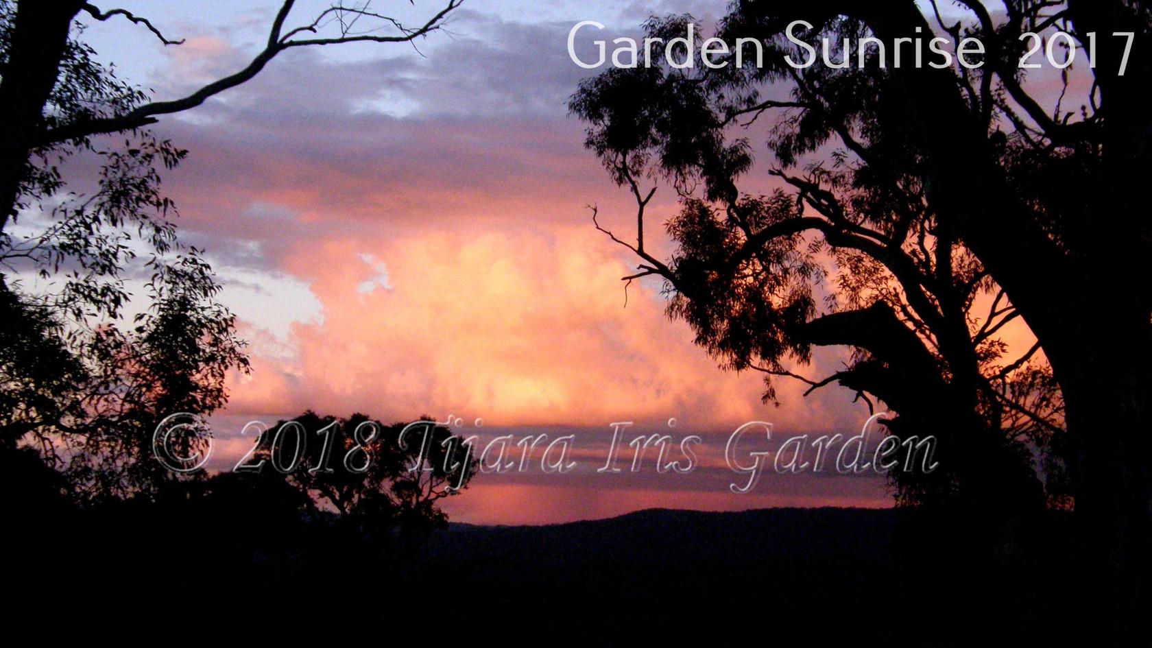 Garden Sunrise  2017.JPG