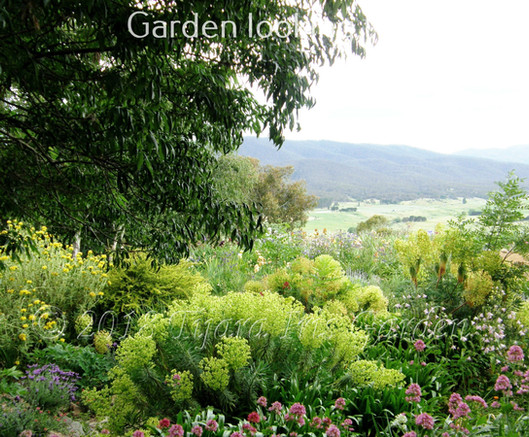 Garden looking North East.JPG