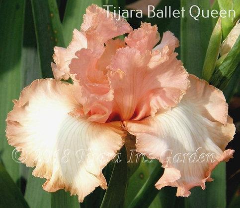 Tijara Ballet Queen