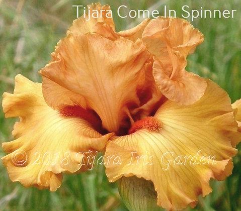 Tijara Come In Spinner