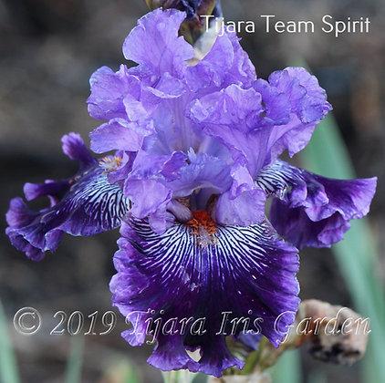 Tijara Team Spirit