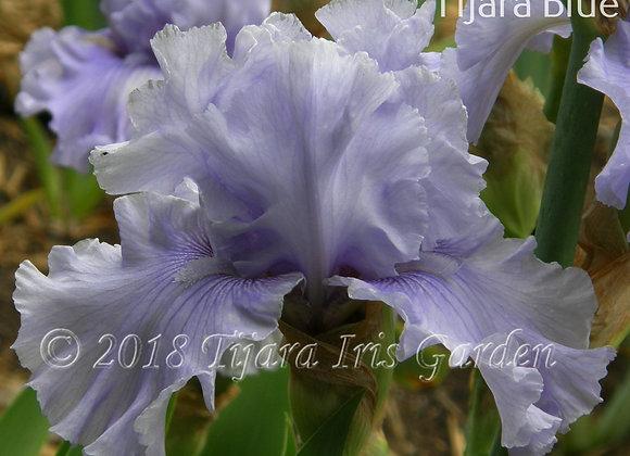 Tijara Blue