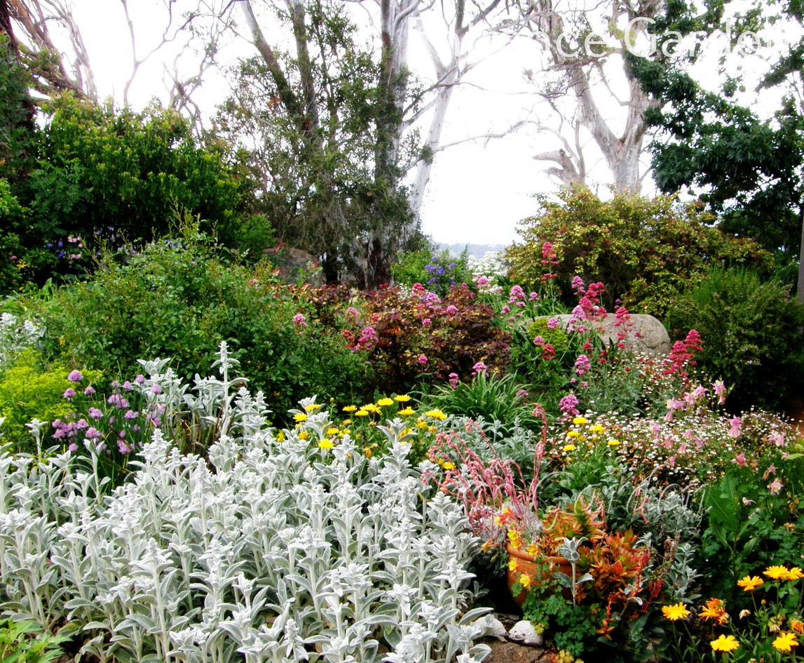 Entrance Garden.JPG