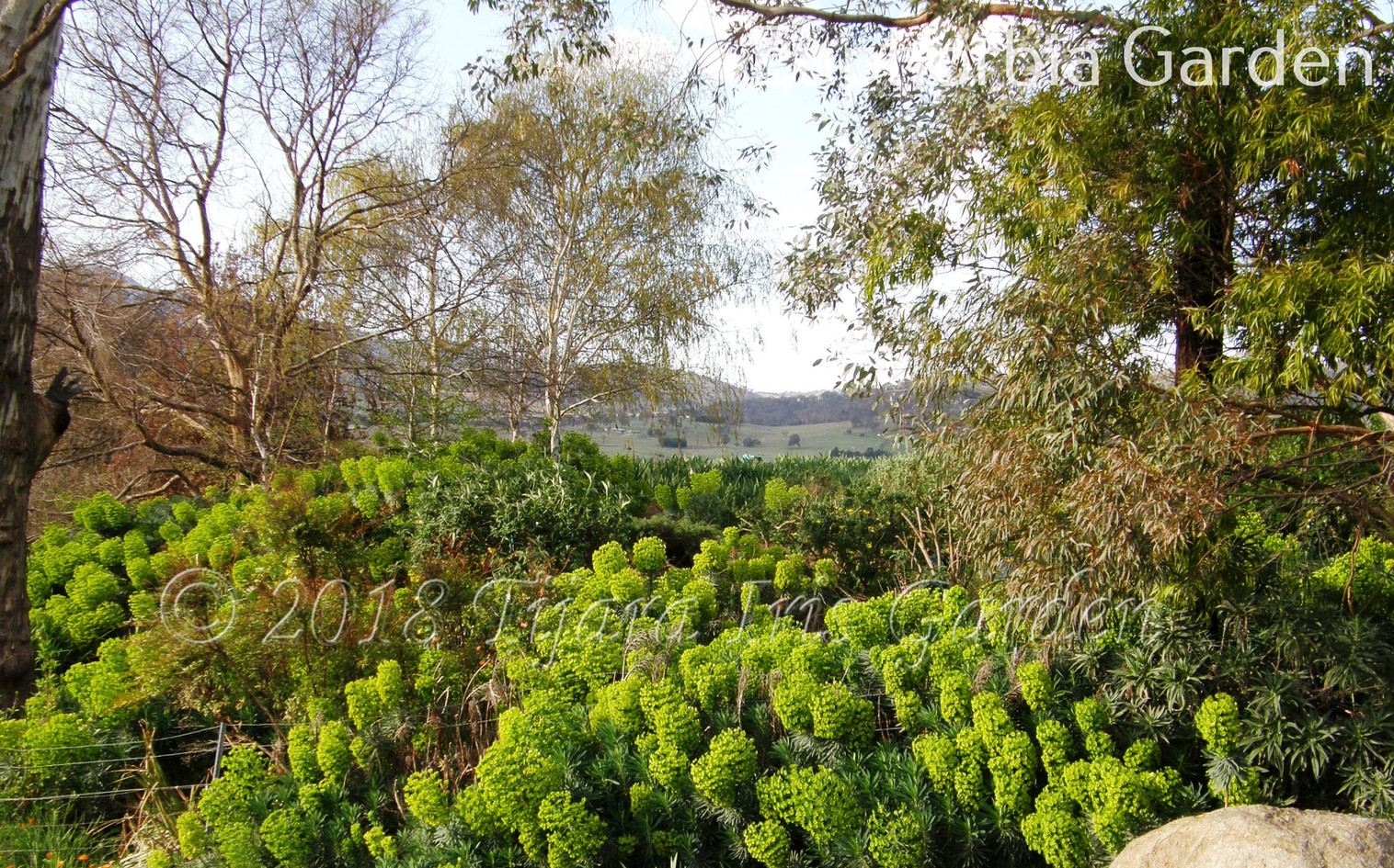 Euphorbia Garden.JPG