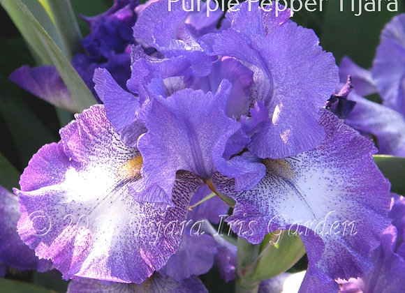 Purple Pepper Tijara
