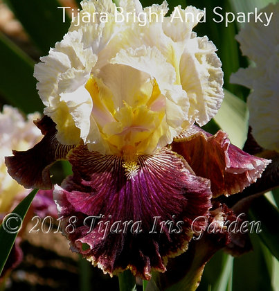 Tijara Bright & Sparky