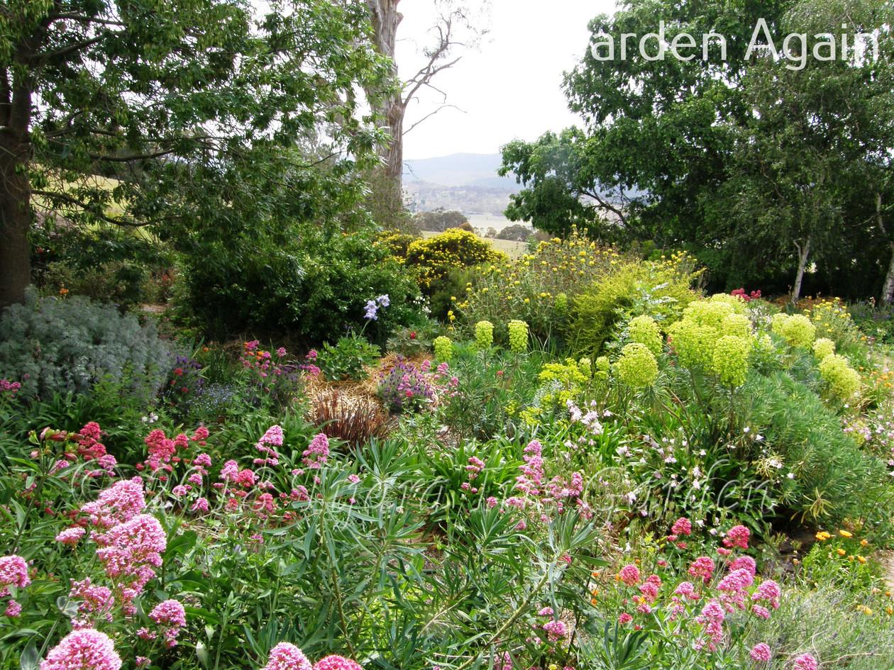 Garden Again.JPG