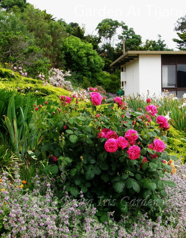 Garden At Tijara.JPG