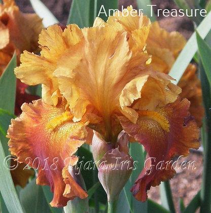 Amber Treasure